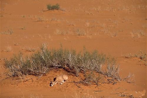 video sex viktoriya gammeva red deer