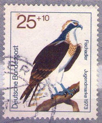 Cette dernière ne le remarque pas, en raison de son plumage blanc. Le  balbuzard img063 731556ac7d7