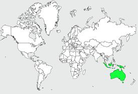 ninoxe-d-australie-1-275-w